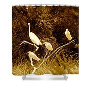 Four Resting Egrets Shower Curtain