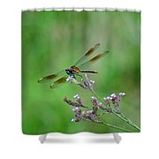 Four-spotted Pennant Shower Curtain