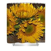 Four Sunflowers Shower Curtain
