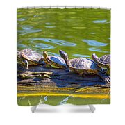 Four Turtles Shower Curtain