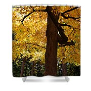 Four Yellow Trees  Shower Curtain