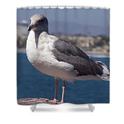 Waterfowl Model Shower Curtain