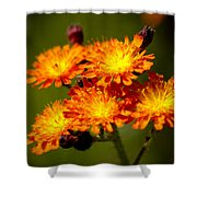Fox-and-cubs Shower Curtain
