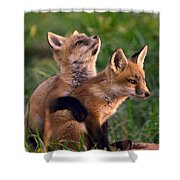 Fox Cub Buddies Shower Curtain by William Jobes