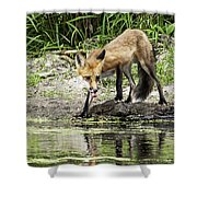 Fox Drink Shower Curtain