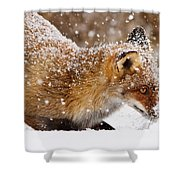 Fox First Snow Shower Curtain
