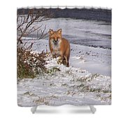 Fox In My Yard Shower Curtain