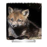 Fox Kit In Den Shower Curtain