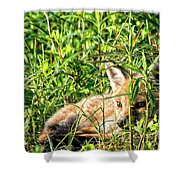 Red Fox Pup Hiding Shower Curtain