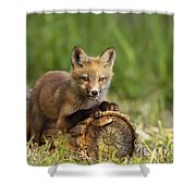 Fox Pup In The Morning Light Shower Curtain