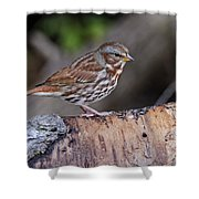 Fox Sparrow Pictures 16 Shower Curtain