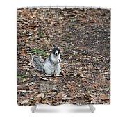 Fox Squirrel Curious Shower Curtain