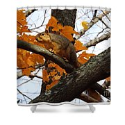 Fox Squirrel In Autumn Shower Curtain