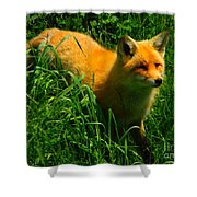 Fox Trot Shower Curtain