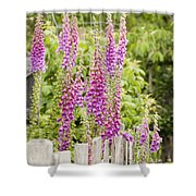 Foxglove Fence Shower Curtain by Anne Gilbert