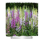 Foxglove Garden In Golden Gate Park Shower Curtain