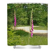 Foxgloves In New Forest Shower Curtain