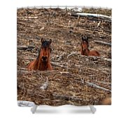 Foxhole Mustangs Shower Curtain