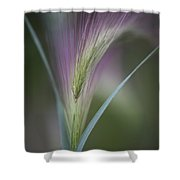 Foxtail Barley Shower Curtain by Priska Wettstein