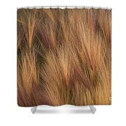Foxtail Shower Curtain