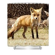 Foxy Momma Shower Curtain