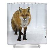 Foxy.. Shower Curtain