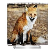 Foxy Shower Curtain by Shane Bechler