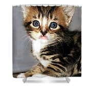 Foxy The Kittens Big Eyes Shower Curtain