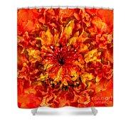 Fractal Chrysanthemum Shower Curtain
