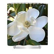 Fragrant Magnolia Shower Curtain