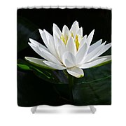 Fragrant Water-lily Shower Curtain