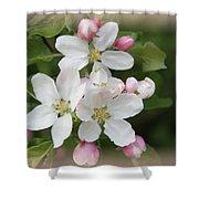 Framed Apple Blossom Shower Curtain