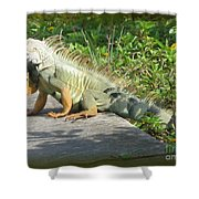 Framed Iguana Shower Curtain
