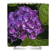 Framed Purple Blue Hydrangea Blossom Shower Curtain