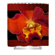 Framed Red Orchid  Shower Curtain