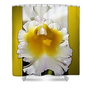 Framed White Orchid Shower Curtain