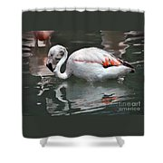 Framingo Shower Curtain