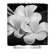 Frangipani In Black And White Shower Curtain
