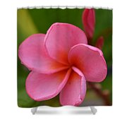 Frangipani With Dew Drops Shower Curtain