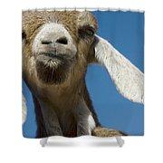 Frankly My Dear I Don't Give A Baaaaaaaaa Shower Curtain