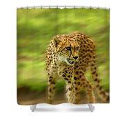 Frantic Shower Curtain