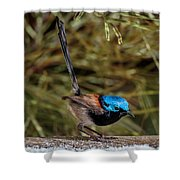 Free Feed Shower Curtain