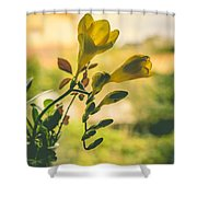 Freesia Shower Curtain by Marco Oliveira