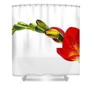 Freesia On White Shower Curtain
