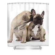 French Bulldog Puppies Shower Curtain
