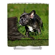 French Bulldogs Shower Curtain by Heike Hultsch