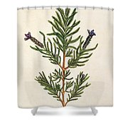 French Lavender Shower Curtain