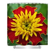 French Marigold Named Solan Shower Curtain