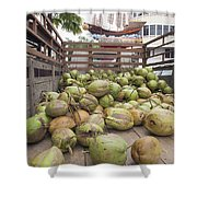 Fresh Coconuts Delivery Truck Shower Curtain