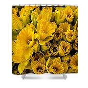 Fresh Daffodils  Shower Curtain
